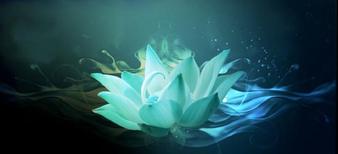 gallery, Beautiful flower